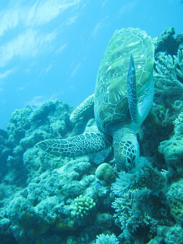 Diep in de zee foto 1